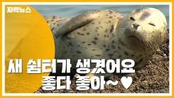 [자막뉴스] 백령도 점박이물범 '새 쉼터가 생겼어요!'