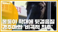 [자막뉴스] 경주마의 비극적 최후...도살 현장 영상 논란