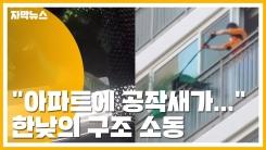 """[자막뉴스] """"아파트에 공작새가..."""" 한낮의 구조 소동"""