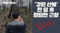 [제보이거실화냐] '강원산불' 한 달 후 참담한 현장을 가다