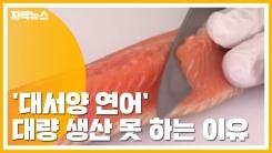 [자막뉴스] '대서양 연어' 양식 성공에도...대량 생산 못 하는 이유