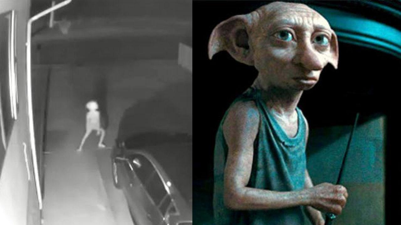 '해리포터 집요정 도비' 닮은 괴생물체 감시 카메라에 포착