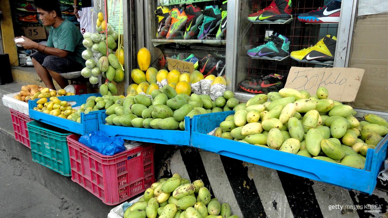 필리핀, 이상 기후로 망고 200만kg 남아돌아...가격 대폭락