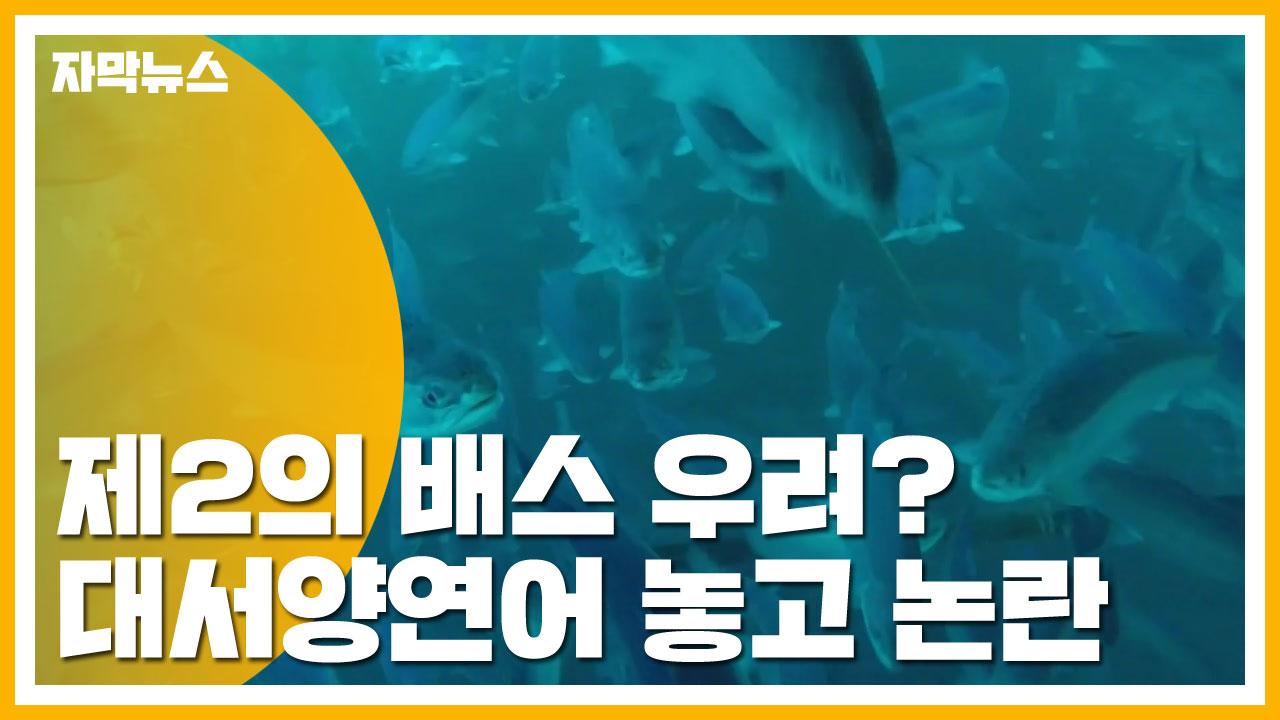 [자막뉴스] 제2의 배스 우려?...대서양연어 놓고 논란