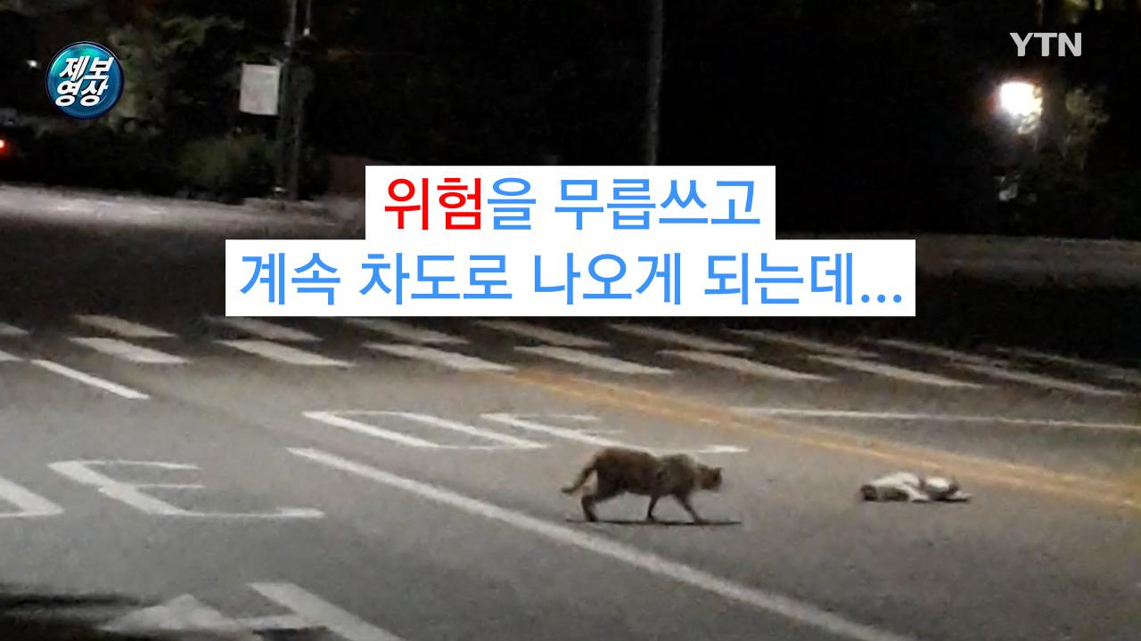 [제보영상] 친구 곁을 떠나지 못하는 고양이