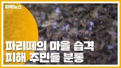 """[자막뉴스] 파리떼로 뒤덮인 마을...""""지자체 대응 부실"""""""
