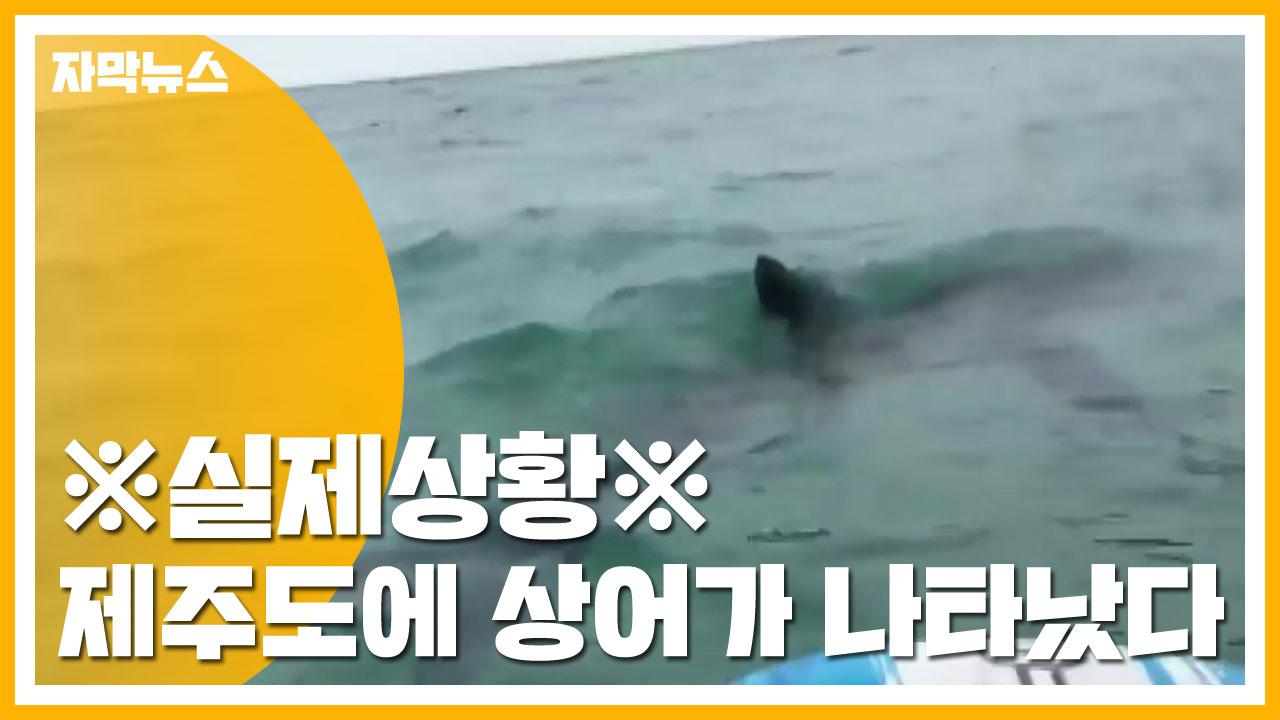 [자막뉴스] 제주 함덕해수욕장에 상어가 나타났다