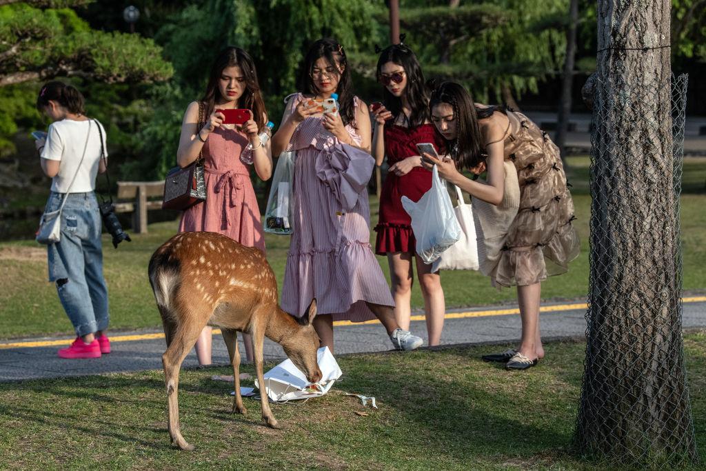 일본 사슴 공원에서 사망한 사슴 몸에서 비닐 잔뜩 나와
