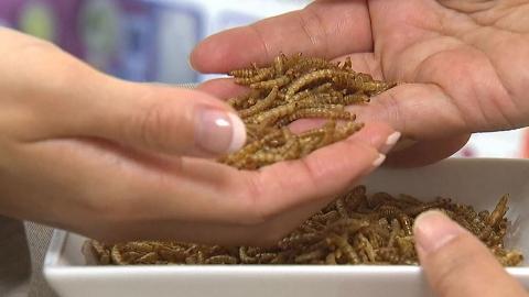 식용곤충이 환자 회복 돕는다!