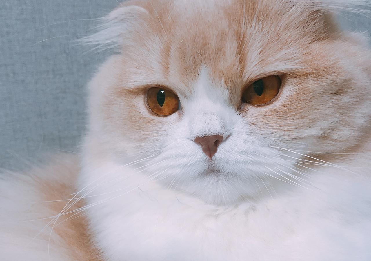홀로 있던 집고양이, 인덕션 켜 화재...예방법은?