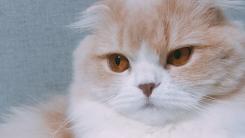 홀로 있던 집고양이, 인덕션 켜 화재…예방법은?