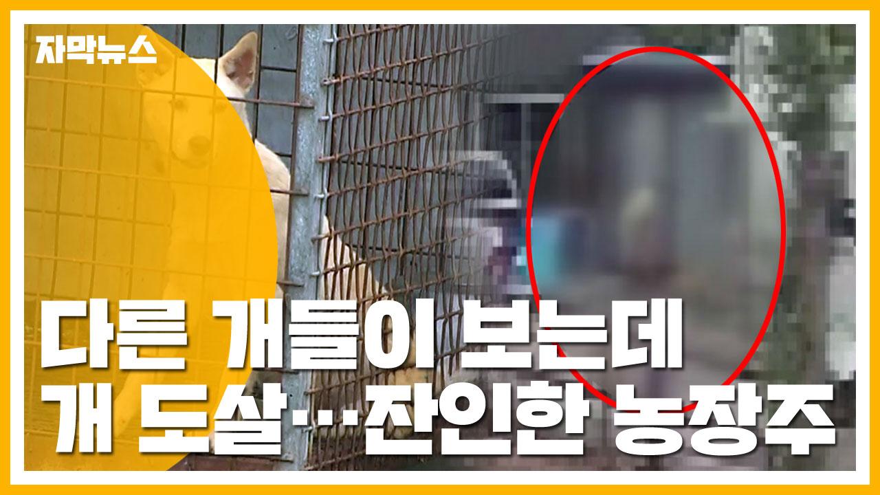 [자막뉴스] 다른 개들 보는 앞에서 개 도살...잔인한 농장주
