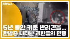 [자막뉴스] 5년 동안 키운 반려견을...한밤중 나타난 괴한들의 만행
