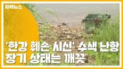 [자막뉴스] '한강 훼손 시신' 수색 작업·신원 확인 난항