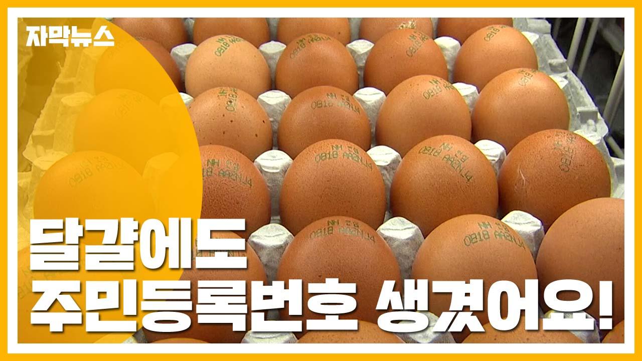 [자막뉴스] '달걀 고유번호' 시행...어떻게 확인할까?