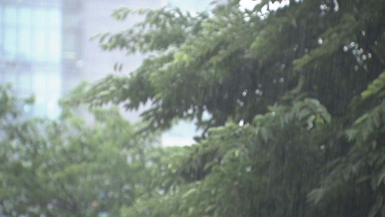 [날씨] 이번 주 내내 '가을장마'...후반엔 '태풍' 가능성