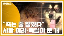 """[자막뉴스] """"죽는 줄 알았다""""...사람 머리·목덜미 문 대형견"""