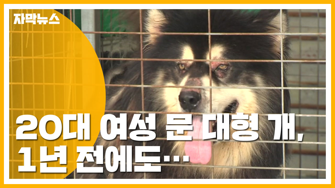 [자막뉴스] 20대 여성 문 대형 개, 1년 전에도...