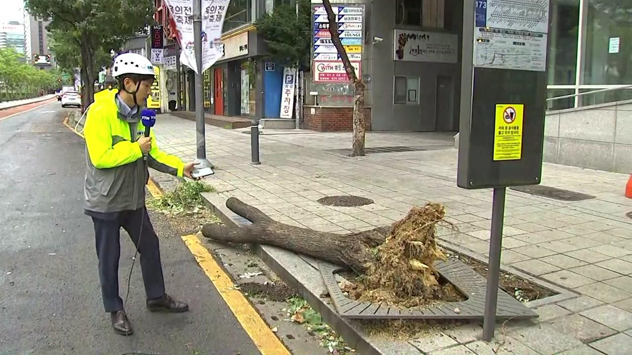 [태풍 위치] 뿌리째 뽑힌 나무...이 시각 서울 도심 상황