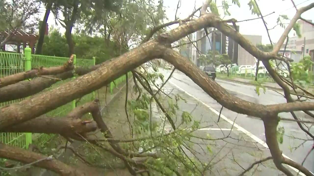 [날씨] 역대 5위 강풍 태풍...'가을 태풍' 또 온다