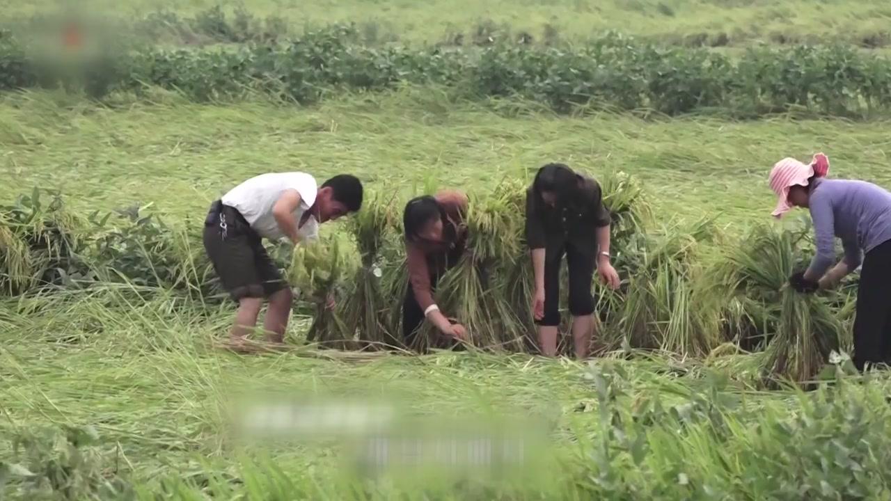 북, 태풍 '링링'으로 5명 숨지고 농경지 458㎢ 피해