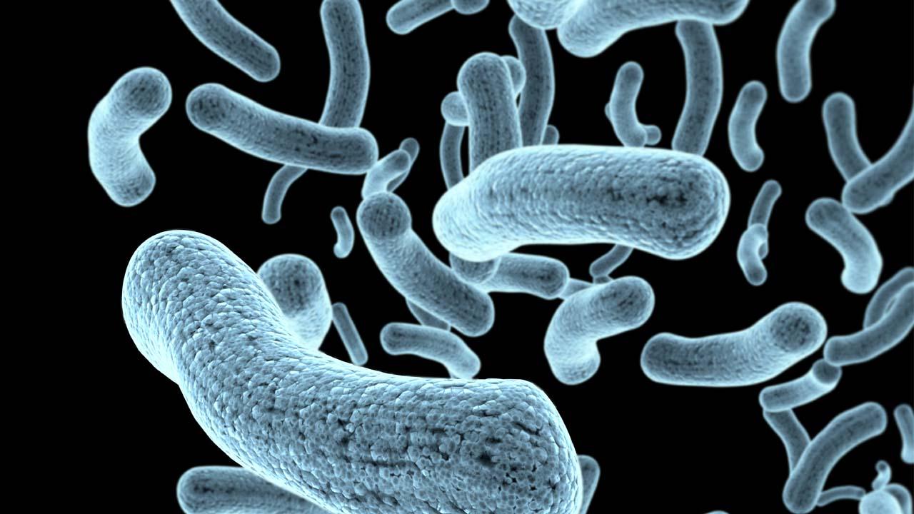 '항생제 무용지물' 슈퍼박테리아 감염자 이달 만 명 넘어
