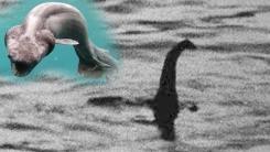 '중국판 네시?' 양쯔강에서 포착된 괴생물체 화제