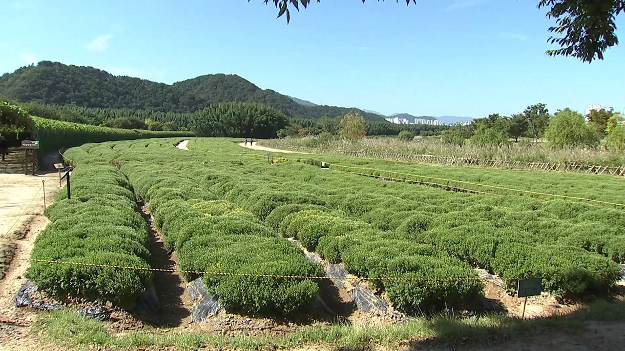 '국가 정원 지정' 울산 태화강, 어떤 모습일까?
