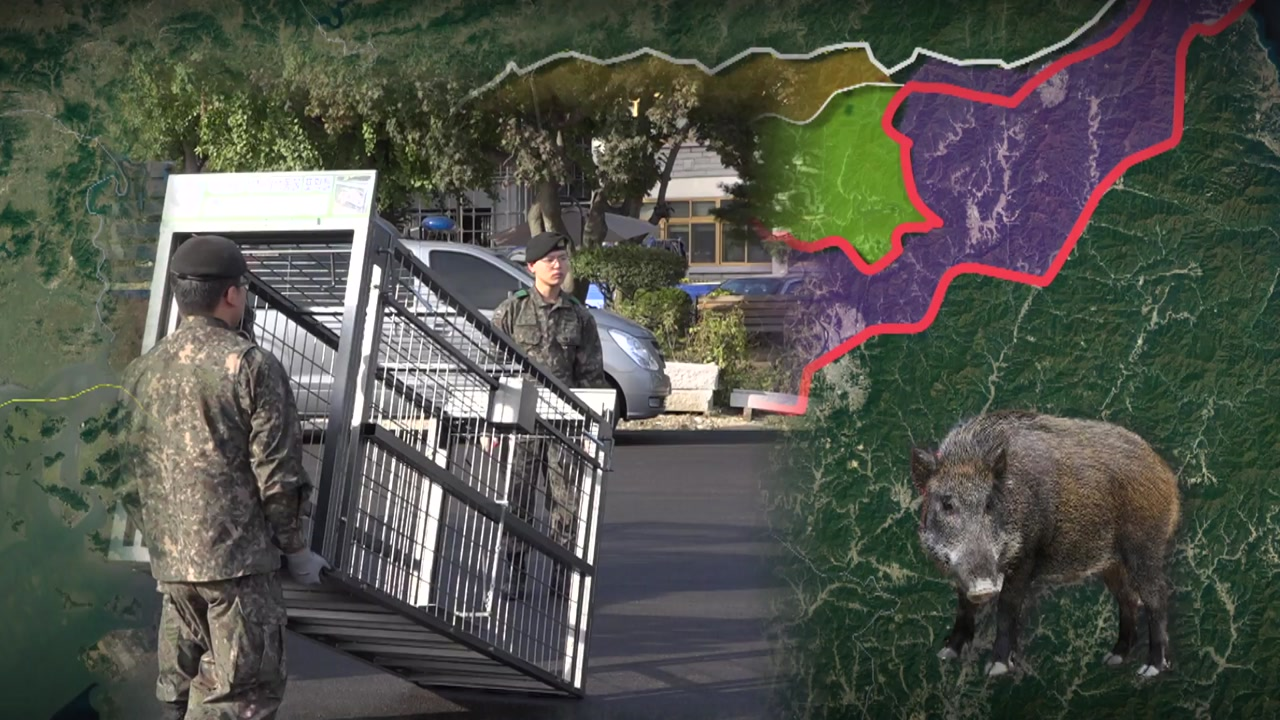 접경지역은 멧돼지와 전쟁 중