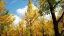 완연한 가을에 단풍 절정...발왕산 정상