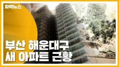 [자막뉴스] 빗물 '줄줄' 곰팡이까지...황당한 새 아파트