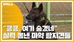 """[자막뉴스] """"킁킁, 여기 숨겼네"""" 실력 뽐낸 마약 탐지견들"""