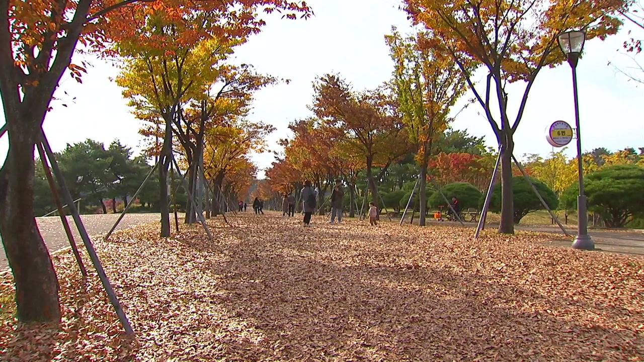 '낙엽 밟는 소리'... 도심속 가을