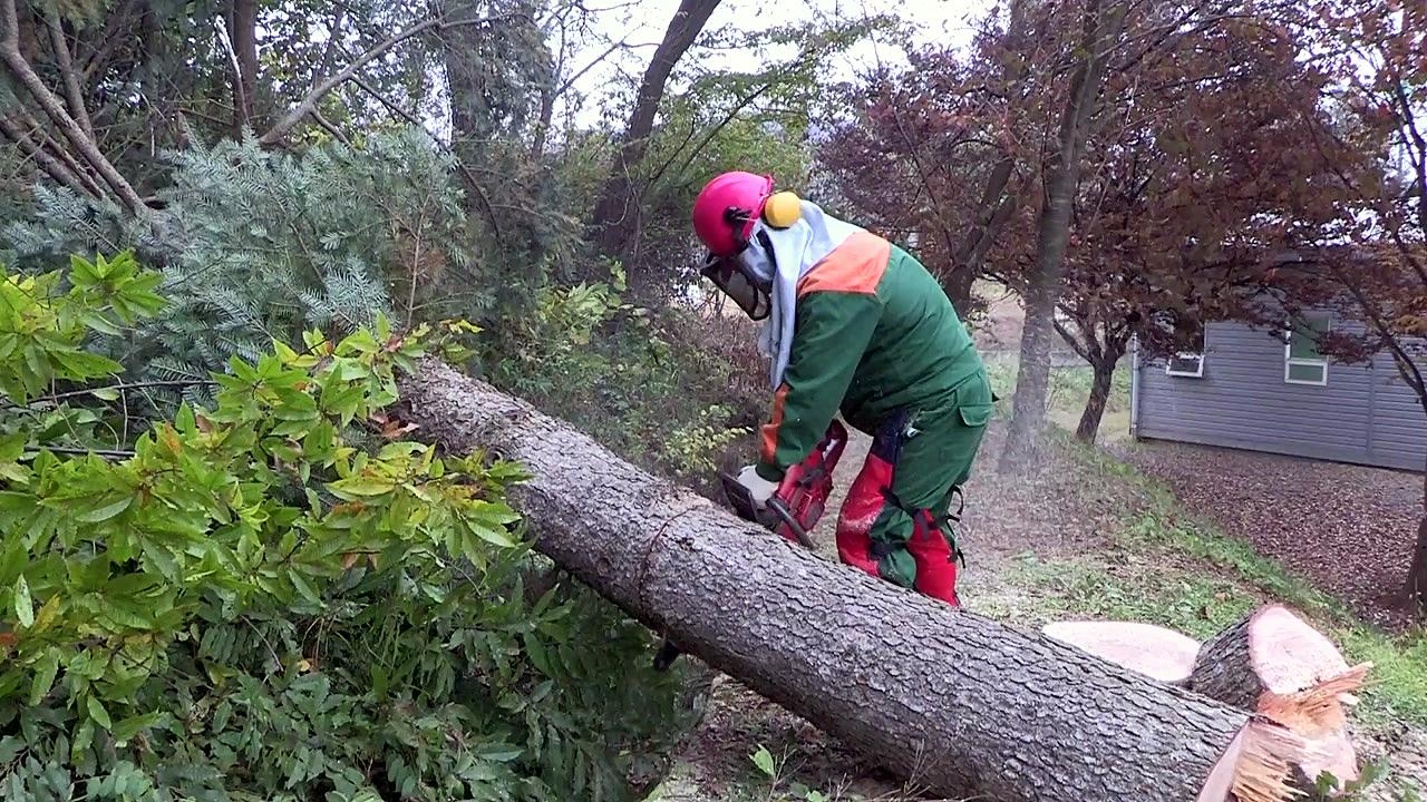 '주변의 위험한 나무 제거해 드립니다'
