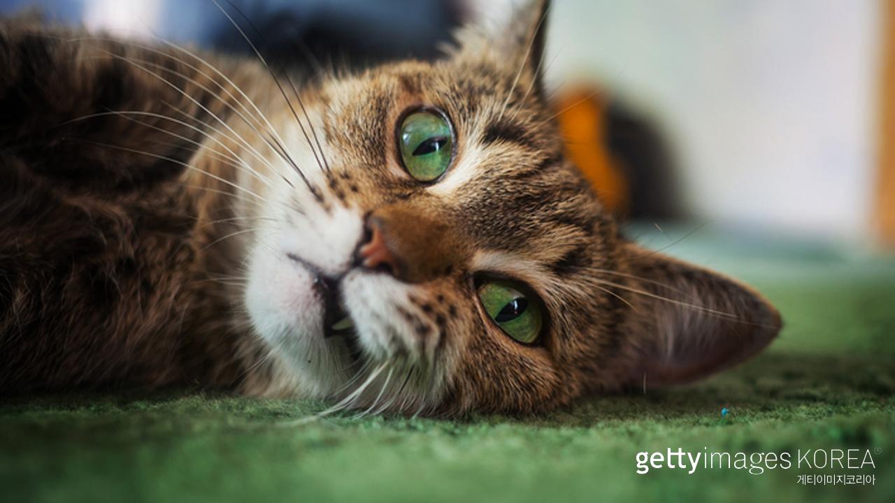 고양이도 표정으로 감정 표현... '인간이 해석 못할 뿐'