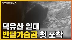 """[자막뉴스] """"자연에서 태어난 듯"""" 덕유산 일대 반달가슴곰 첫 포착"""