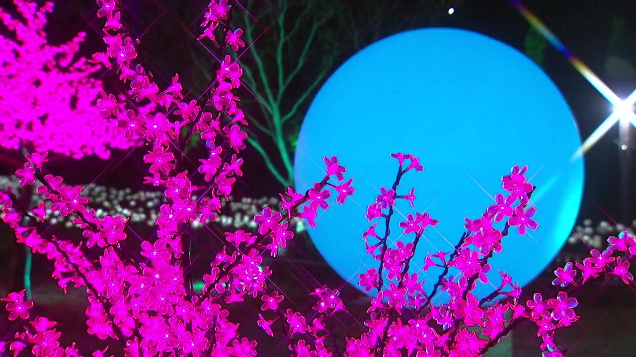 '녹차 수도' 보성 차밭,  화려한 빛의 향연!