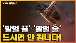 [자막뉴스] '말벌 꿀'·'말벌 술', 드시면 안 됩니다!