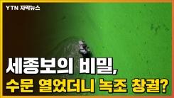 [자막뉴스] 세종보의 비밀, 수문 열었더니 녹조 창궐했다?