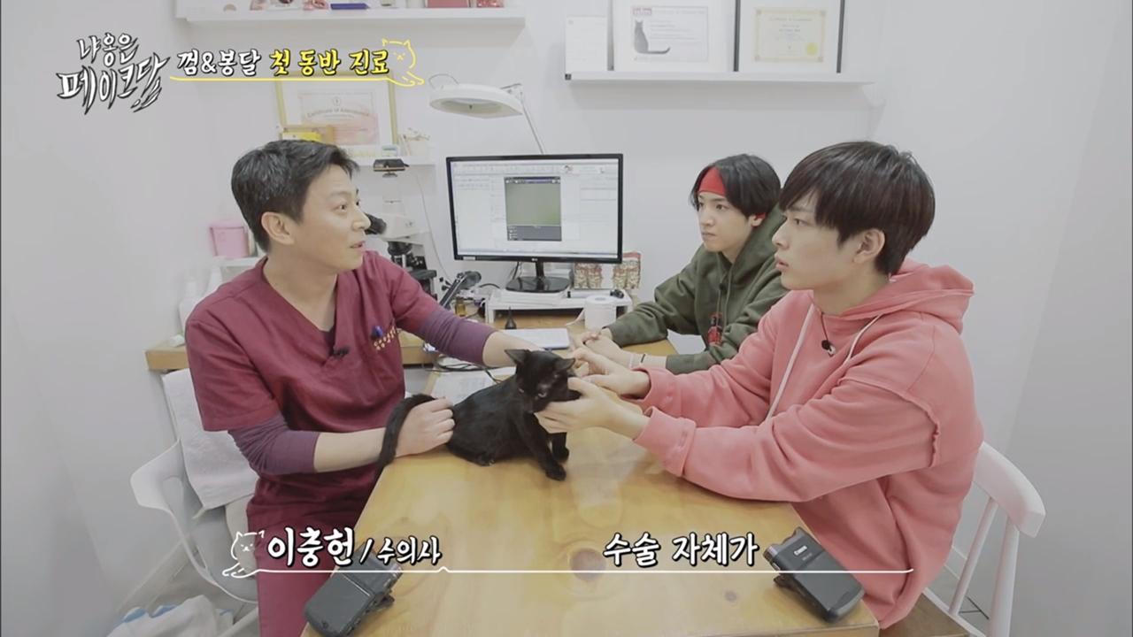 [단독] 입양 절차 논란 tvN '냐옹은 페이크다', 고양이 결국 반환_이미지