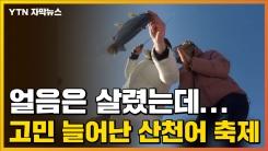 [자막뉴스] 얼음은 살렸는데...고민 늘어난 산천어 축제