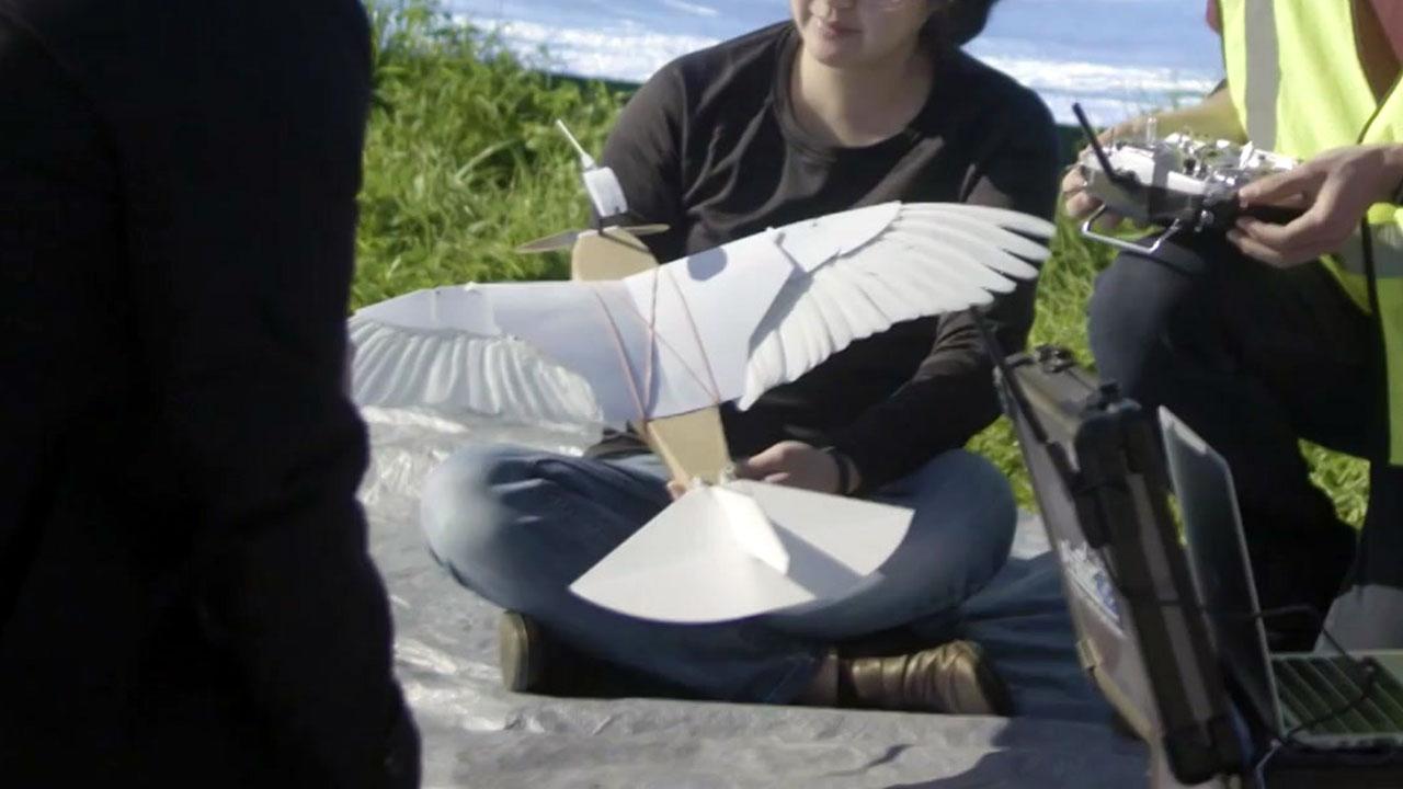 비둘기 깃털 40개로 만든 비행 로봇...하늘 '훨훨'
