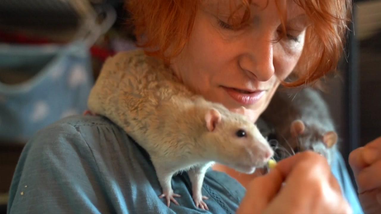 세계적 작가의 별난 '쥐' 사랑...36마리가 한 가족