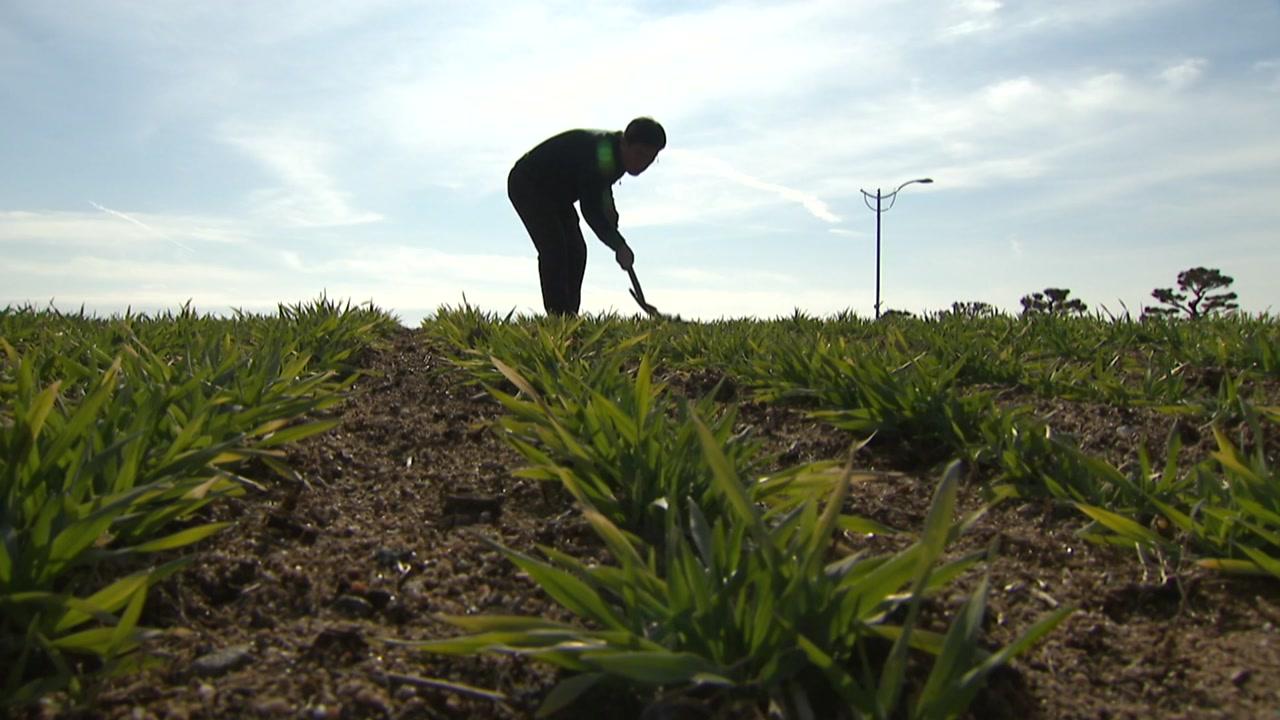 따뜻한 겨울, 자칫 기습한파에 농작물 동해 우려