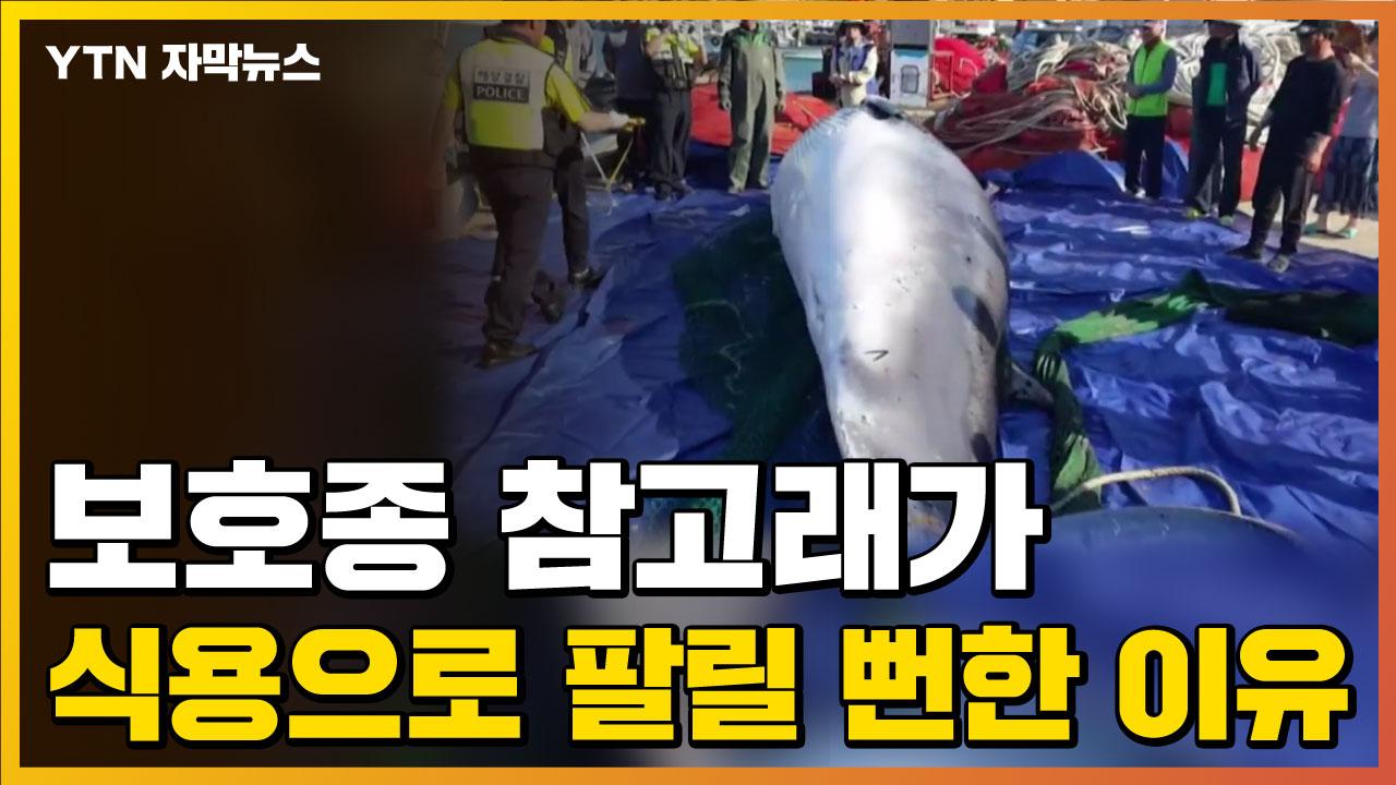 [자막뉴스] 보호종 참고래가 식용으로 팔릴 뻔한 이유