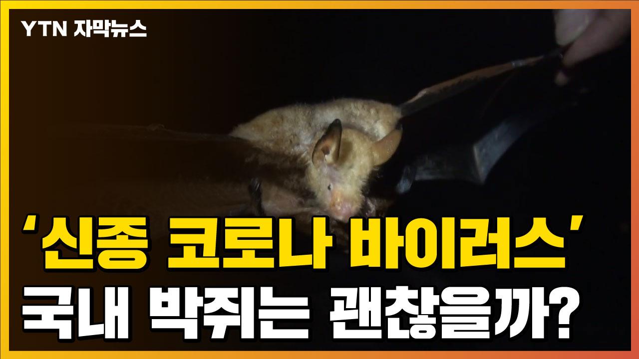 [자막뉴스] '신종 코로나 바이러스' 국내 박쥐는 괜찮을까?