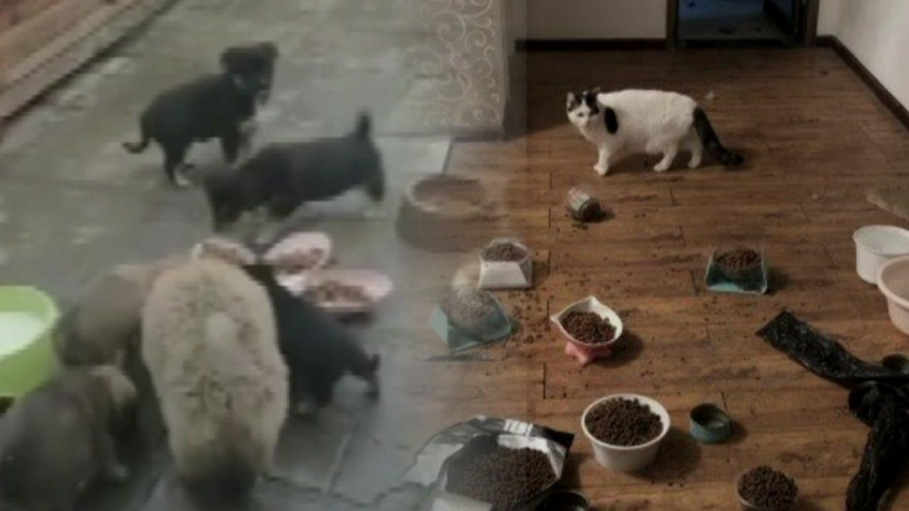 [영상] 우한의 또 다른 재앙, 버려진 반려동물들