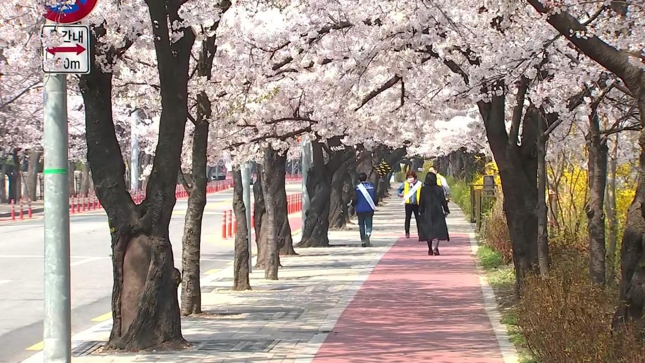 [날씨] 봄꽃보다 거리 두기!...윤중로·공원 폐쇄