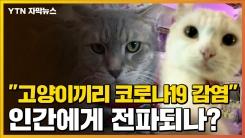 """[자막뉴스] """"고양이끼리 코로나19 옮아""""...美에서 나온 연구결과"""