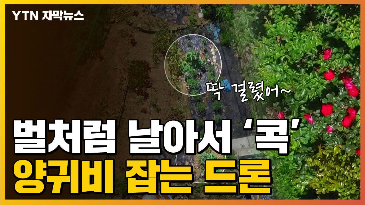[자막뉴스] 벌처럼 날아서 '콕'...불법 양귀비 잡는 드론